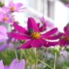 花 自然 きれい