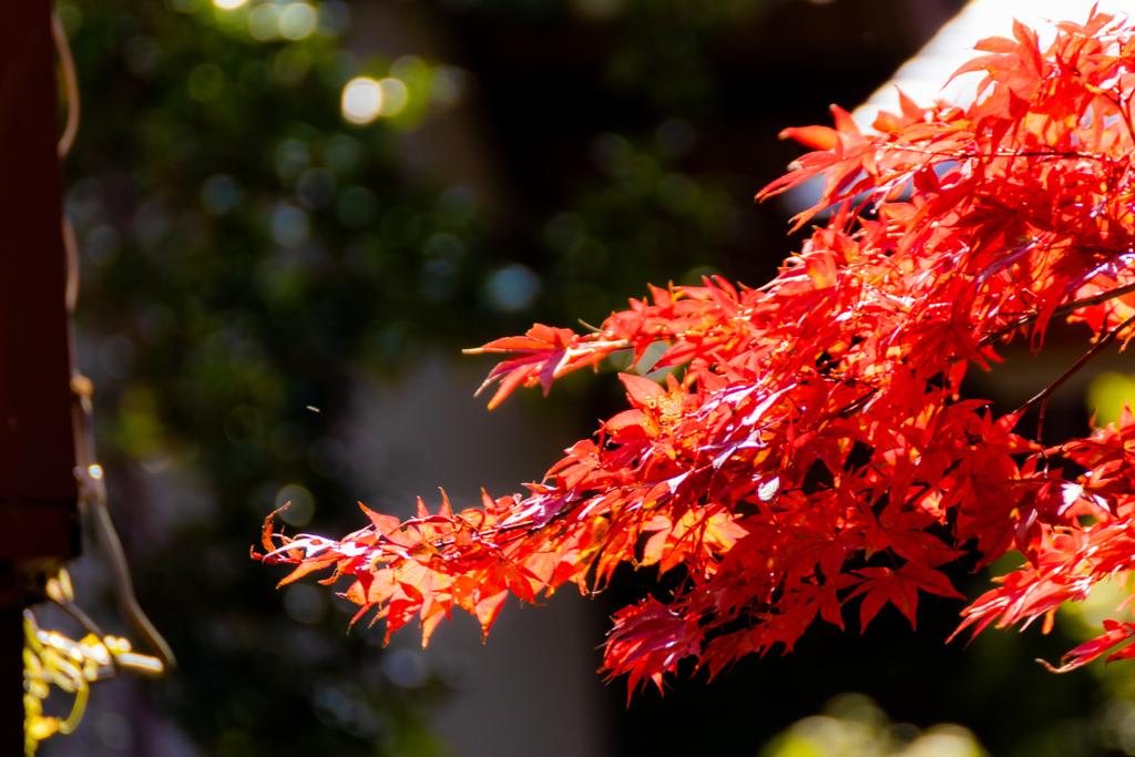 春日山神社にて
