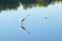 鳥 池 秋 2020.11.05