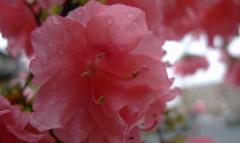 雨の日 花