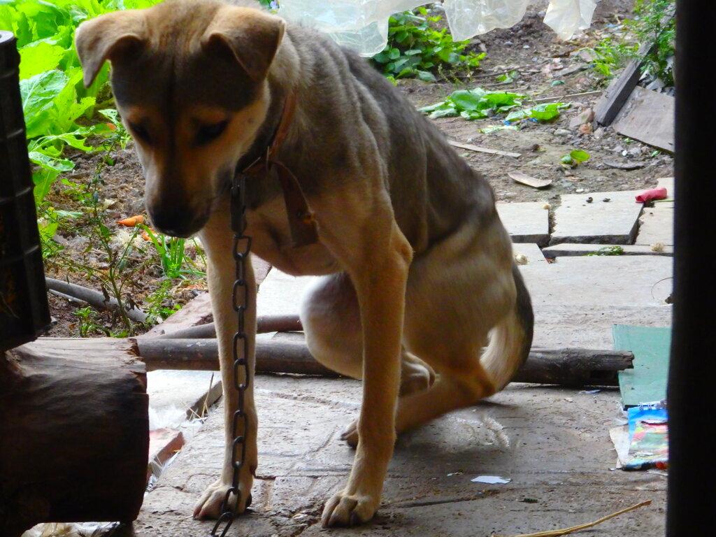 重い腰をあげるお犬様