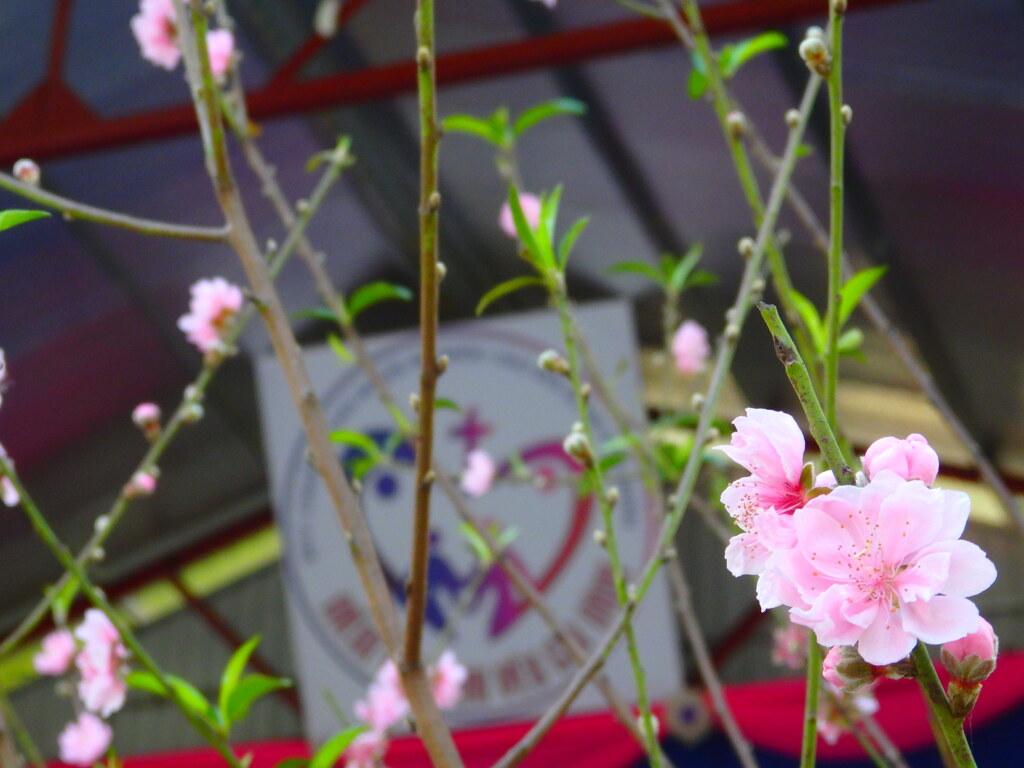 やはりここにも桃の花