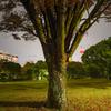 雨の夜の木