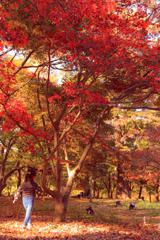 紅葉と松ぼっくり拾いする娘