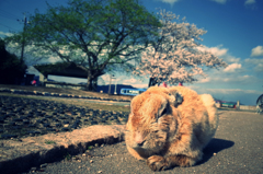 大久野島の春