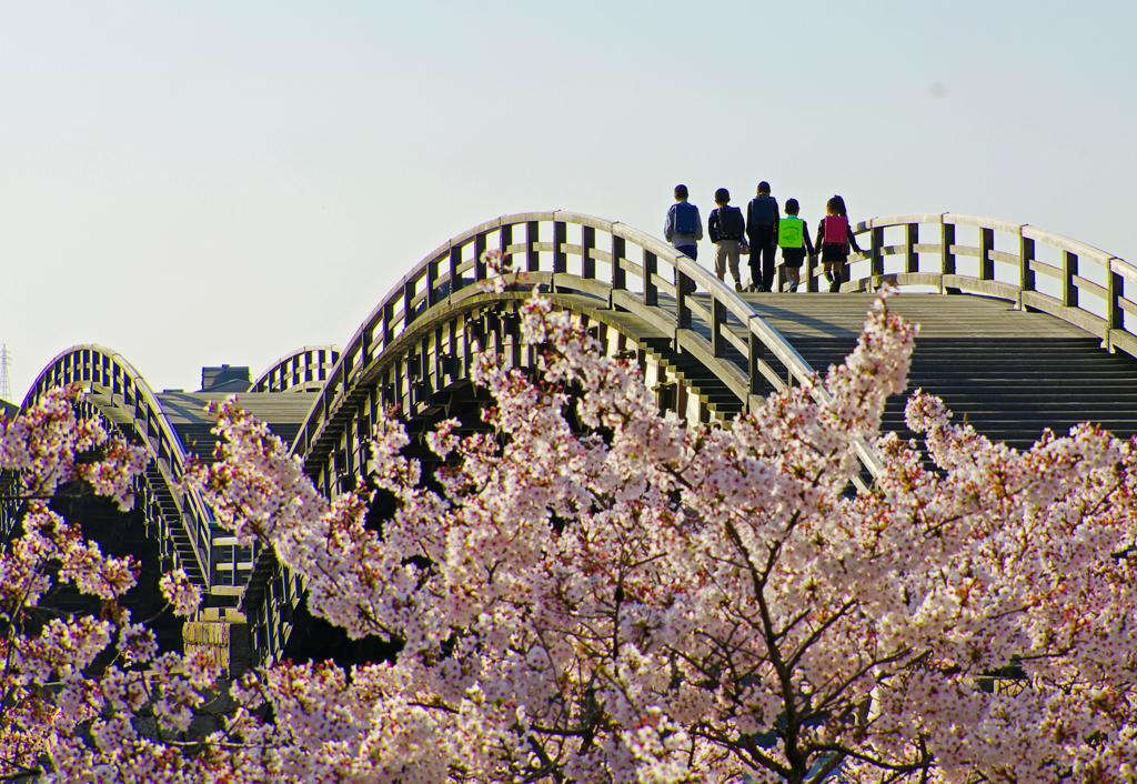 PINK  ~桜橋を渡って~
