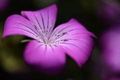 春バラと一緒に咲いていた花 2021