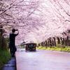 2021年 伏見の桜-7