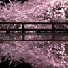2021年 三井寺の桜-4