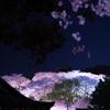 2021年 三井寺の桜-5