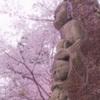 2021年 三井寺の桜-6