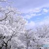 新雪の朝 4 つかの間の晴れ間