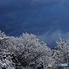 新雪の朝 6 曇天