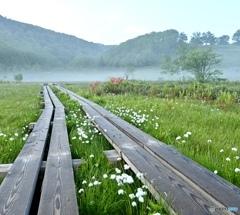 朝霧揺れる田ノ原湿原