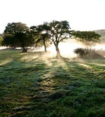 霧裂く朝日 カヤノ平