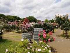 薔薇を手入れする庭師