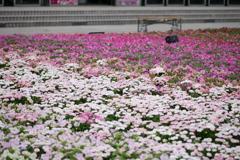 花のグラデーション(暖色)