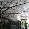 桜の片面アーチ