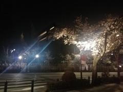 夜の靖国神社の鳥居