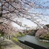 ボート乗り場と桜と菜の花