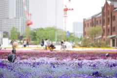 花のグラデーション@赤レンガ倉庫