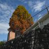 201122 木とフェンスとビニール
