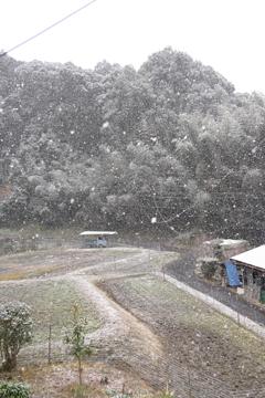 201231 雪の日