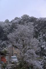 201231 柿の木