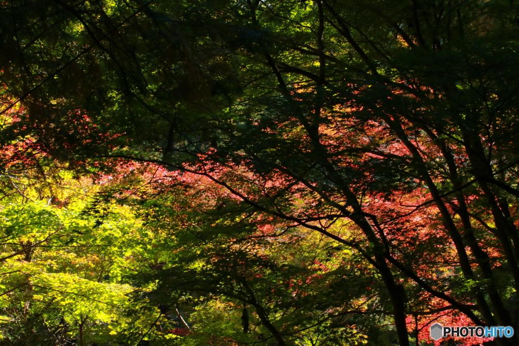 晴れた日の秋の紅葉