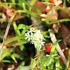 箱根湿性花園