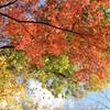 紅葉の箱根仙石原