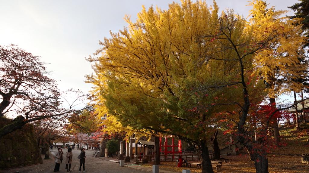 会津城 大銀杏