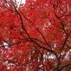 五色沼 紅葉2