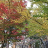 会津城 紅葉4