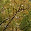 会津城 紅葉3