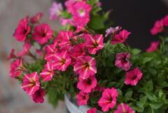 酒蔵前のお花