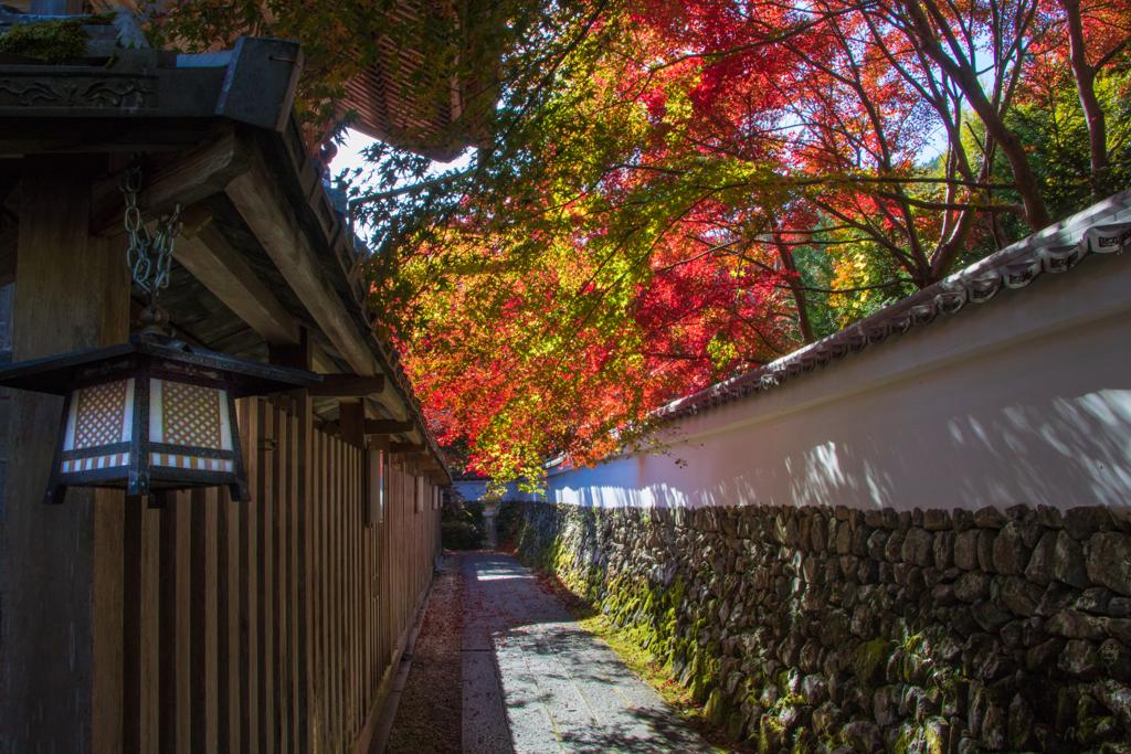 紅葉の小路