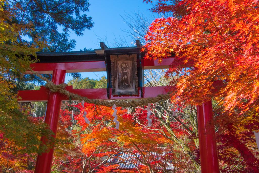 鍬山神社 2020秋