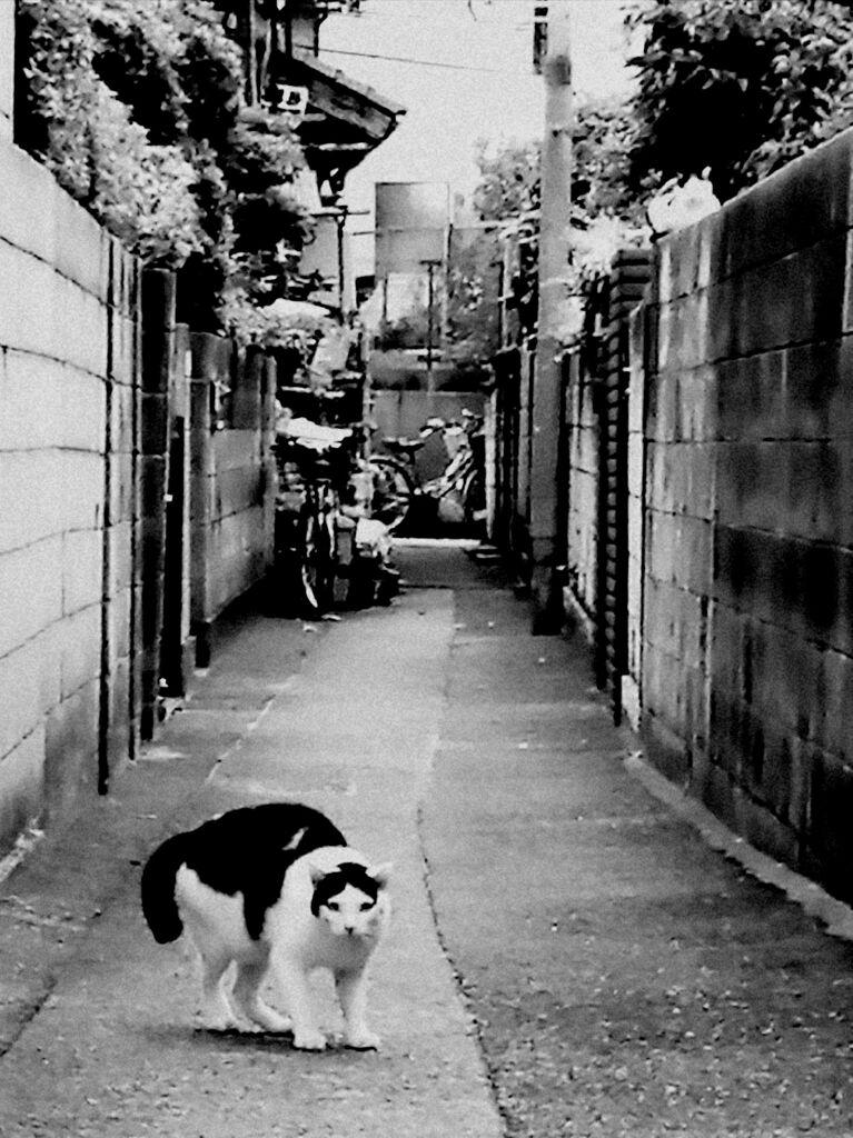 お散歩カメラ 戦闘態勢
