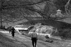 冬寒の散歩道