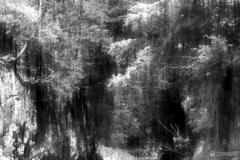 新緑の鳩ノ巣渓谷