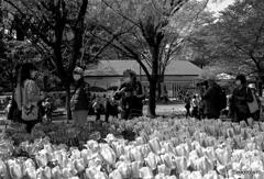 春を撮る人達
