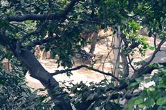 木々の隙間からの二輪