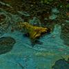 凍る川 6