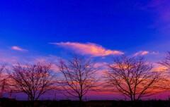 色彩の木(桜)5