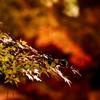 縮景園の紅葉ライトアップ