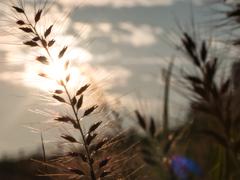 豊かな実りに朝の光を