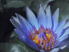 新月の夜に咲く花