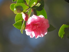 冬の訪れを告げる花