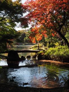 六義園の秋